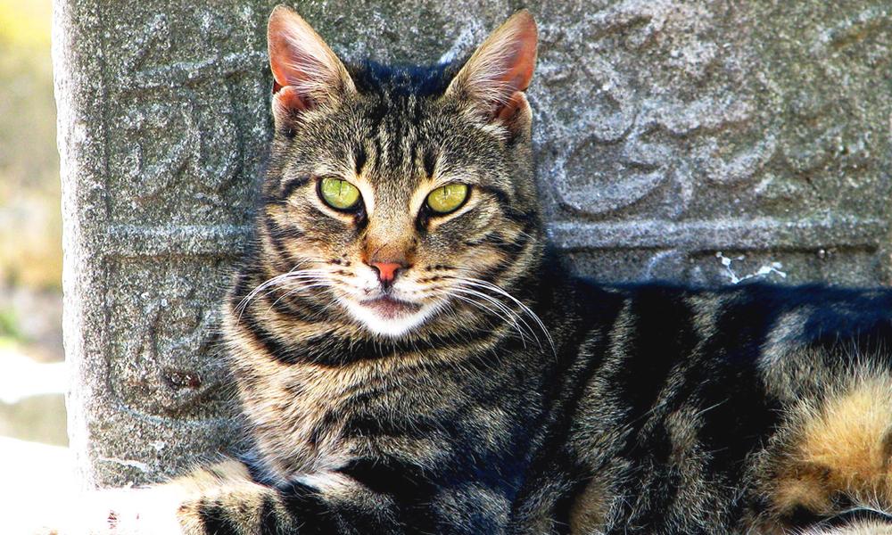 7 destinatii indragite de iubitorii de pisici