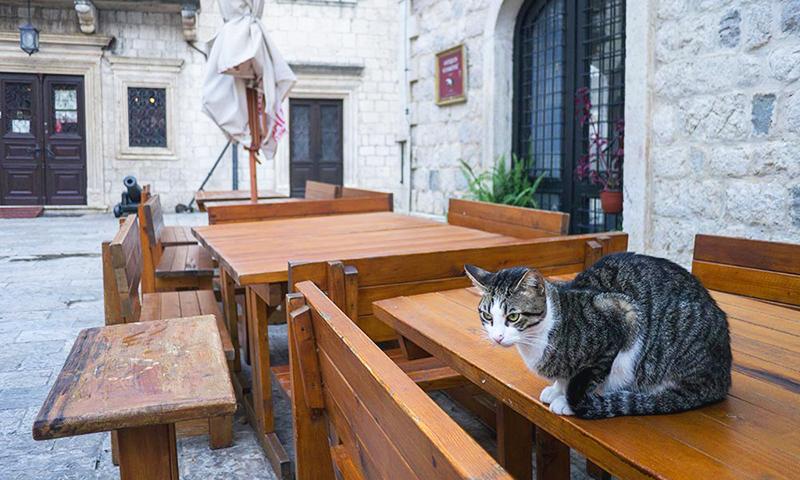 Pisica in Centrul Istoric din Kotor