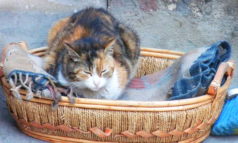 Pisica in Istanbul