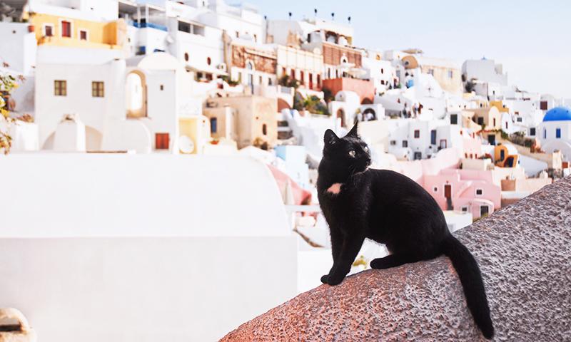 Pisica in Santorini