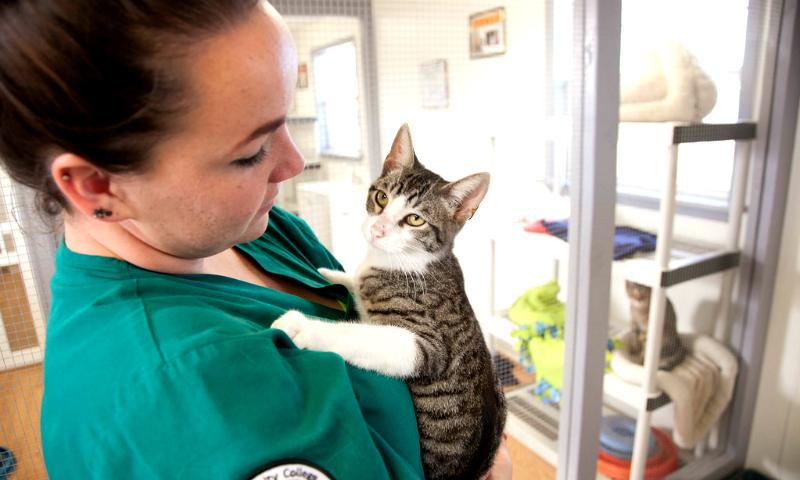 Vizita la medicul veterinar