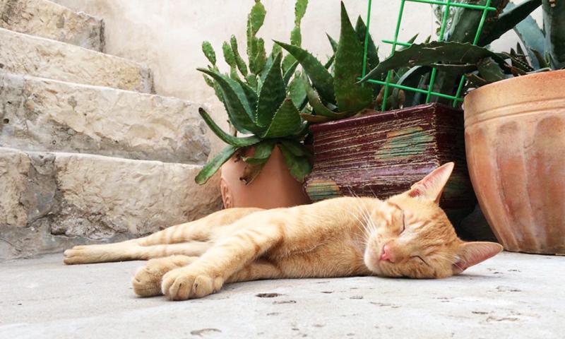 Pisica in Dubrovnik